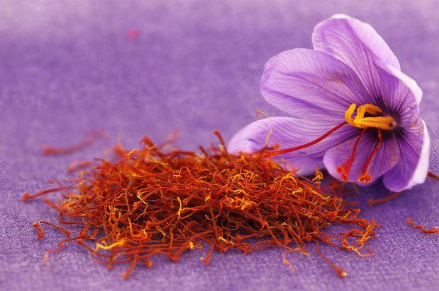 Safran Blüte und Samen
