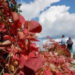 geführte Wanderreise Triest rotes Herbstlaub
