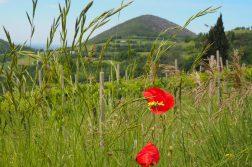 Hügellandschaft im Friaul