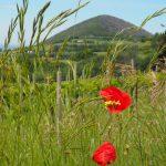 Wanderreise Friaul Hügellandschaft
