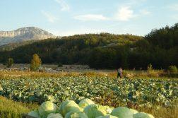 geführte Wanderreise Montenegro Kohlfeld im Orjen Gebirge Montenegro
