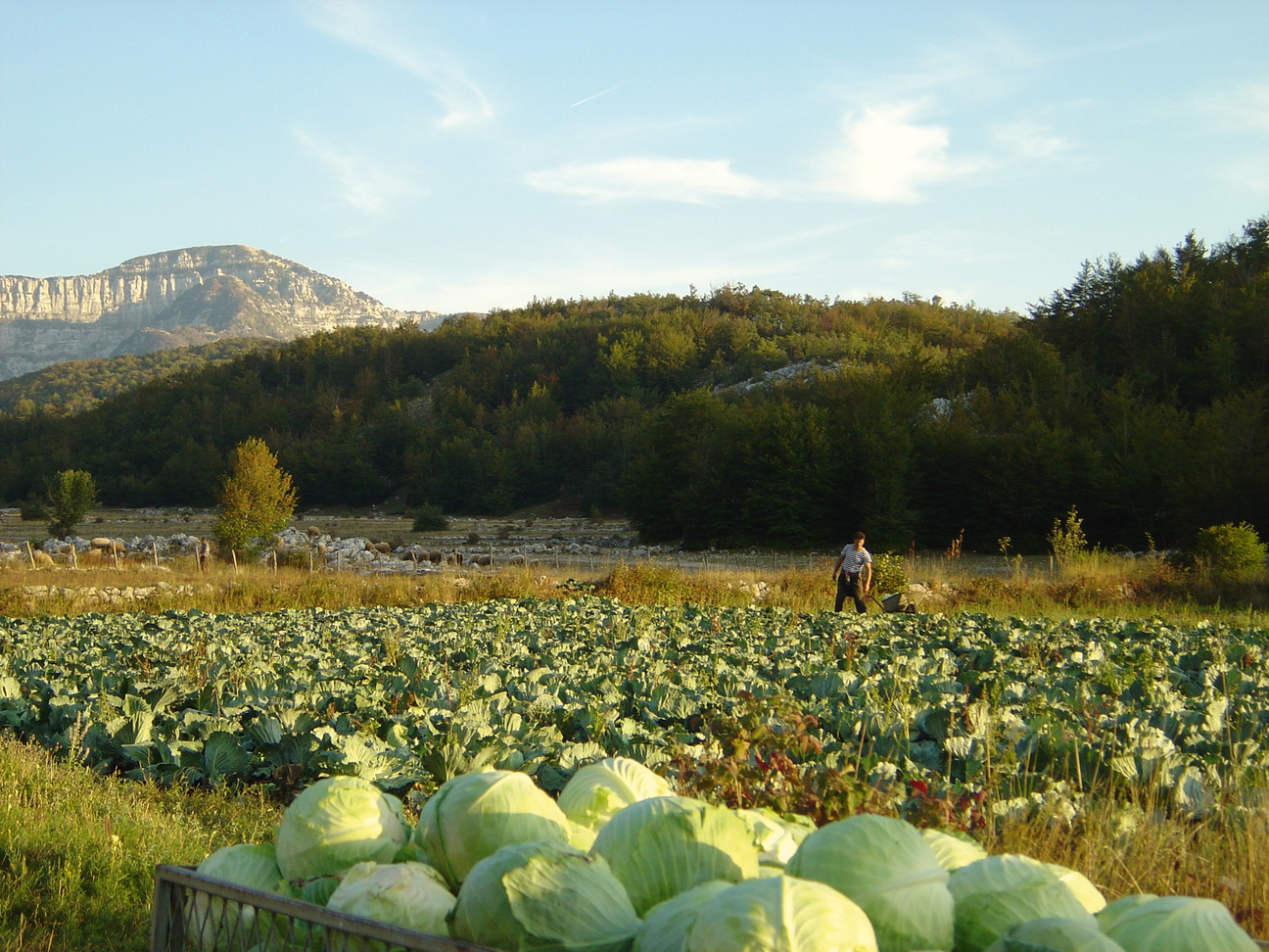 Kohlfeld Im Orjen Gebirge Montenegro