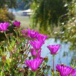 Südportugal Blühten vor See