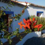 rote Blühten vor Pension