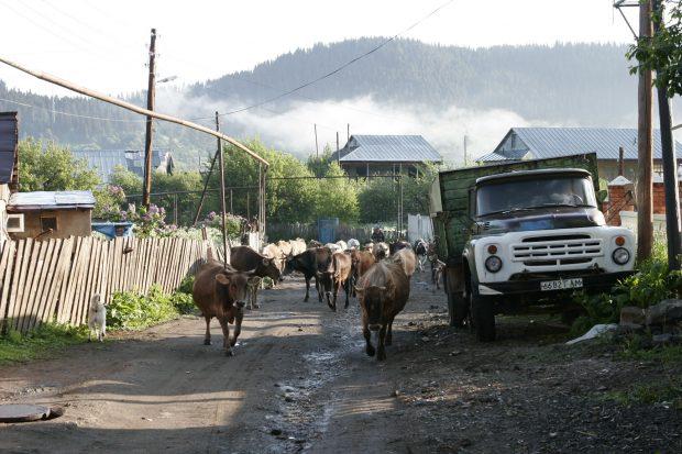 Kleiner Kaukasus Barkuriani