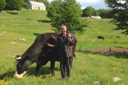 Bäuerin mit Kuh im Orjen Gebirge