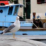Möwe an der italienischen Adria
