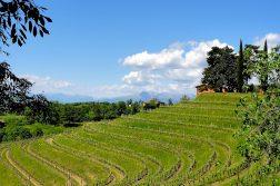 Weinterrassen im Collio