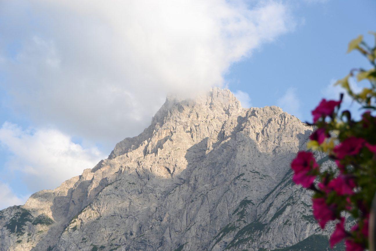 Blumen und Berge in Sappada Dolomiten