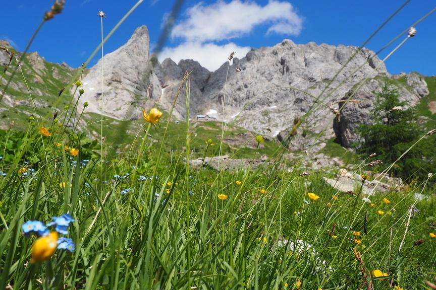 Bergwiese In Den Dolomiten
