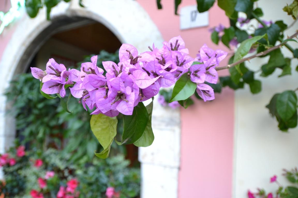 Blütenpracht In Limone