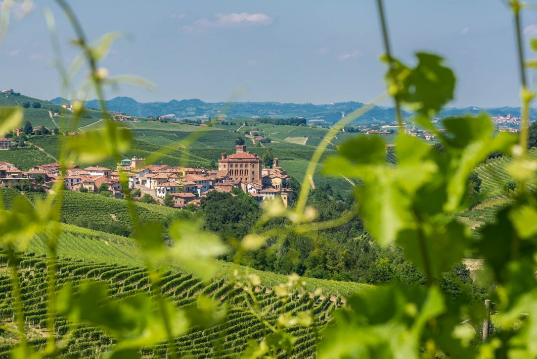 Blick über die Weinterrassen nach Barolo
