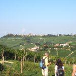 geführte Wanderreise Piemont unterwegs in den Weinbergen