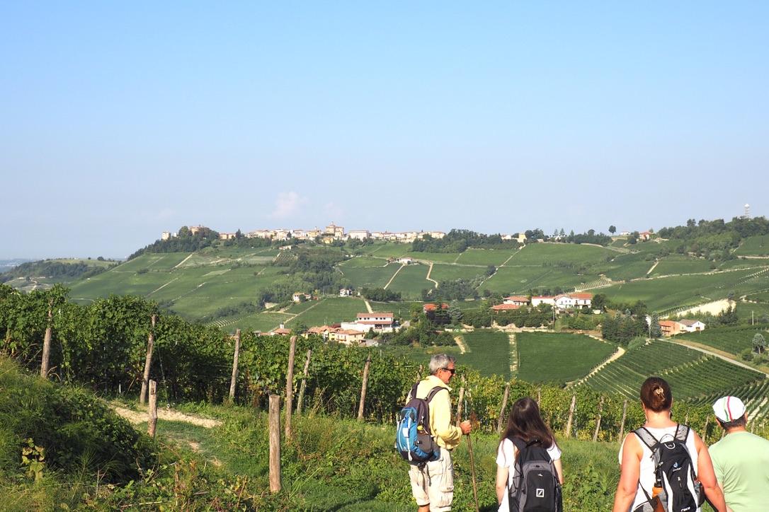 Wandergruppe In Den Weinbergen Des Piemont