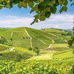 geführte Wanderreise Piemont Blick auf die grünen Hügel von Barolo