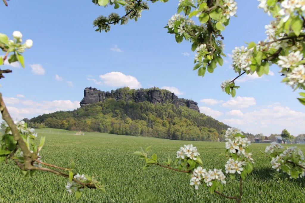 geführte Wanderreise Sächsische Schweiz Frühling am Lilienstein