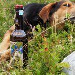 Hund mit Schnapsflasche im Durmitor Nationalpark