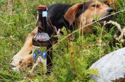 betrunkener Hund im Durmitor Nationalpark