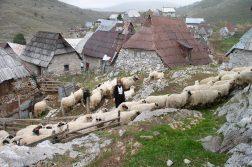 Bäuerin mit Schafen im Ort Lukomir