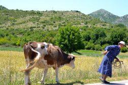 Oma mit Kuh