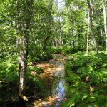 Wasserlauf im Biogradska Gora Nationalpark
