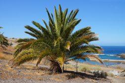 geführte Wanderreise Kanaren Palme und Meer
