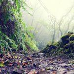 geführte Wanderreise Teneriffa Weg durch Regenwald
