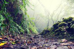 geführte Wanderreise Kanaren Weg durch Regenwald auf Teneriffa