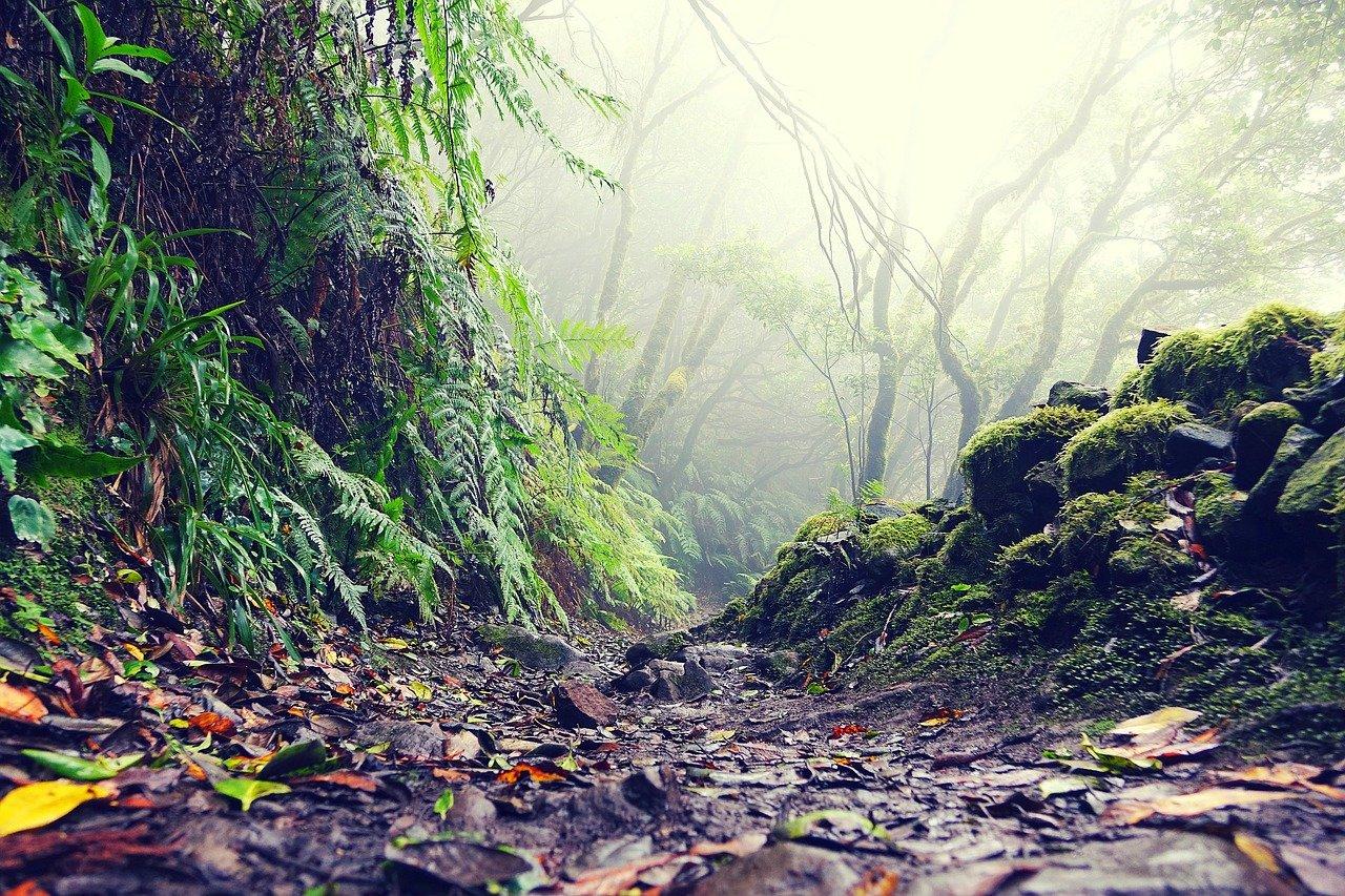Weg Durch Regenwald Auf Teneriffa