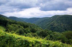 Blick über die Wälder des Ahrtals