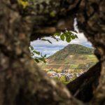 Blick durch ein Baumloch auf Weinberge