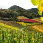 Bunte Herbstfarben in den Weinhängen des Ahrtal