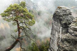 Blick bei der Bastei in den nebeligen Grund