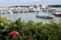 kleine Boote im kleinen Hafen Casamicciola