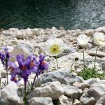 geführte Wanderreise italienische Alpen Blumen vor Bergsee
