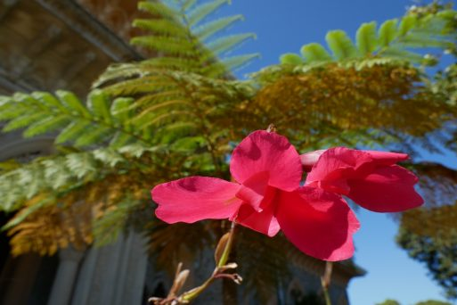 geführte Wanderreise Portugal Blume im Schloss Monserrate