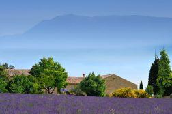 geführte Wanderreise Provence Lavendelfeld Haus und Berge