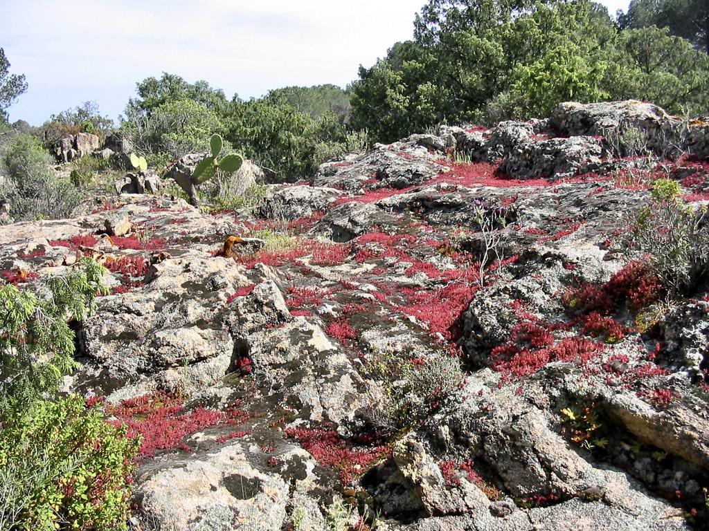 geführte Wanderreise Sardinien bunt bewachsene Felsen